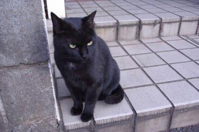 黒猫 (1941年の映画)