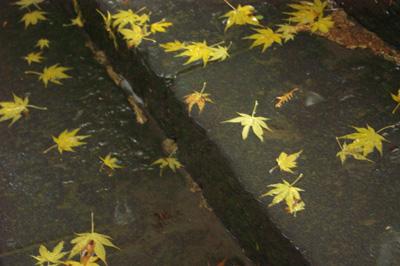 紅葉も始まったよう