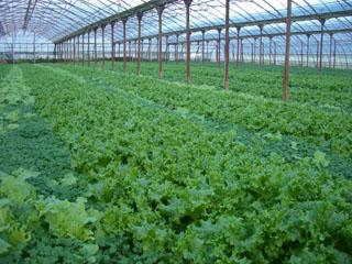 farm145.jpg
